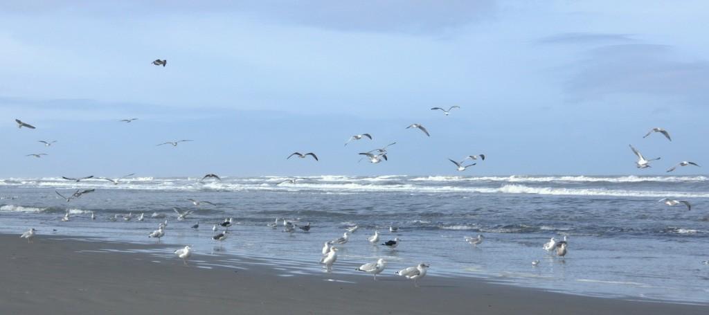 Strandvondsten Ameland 18